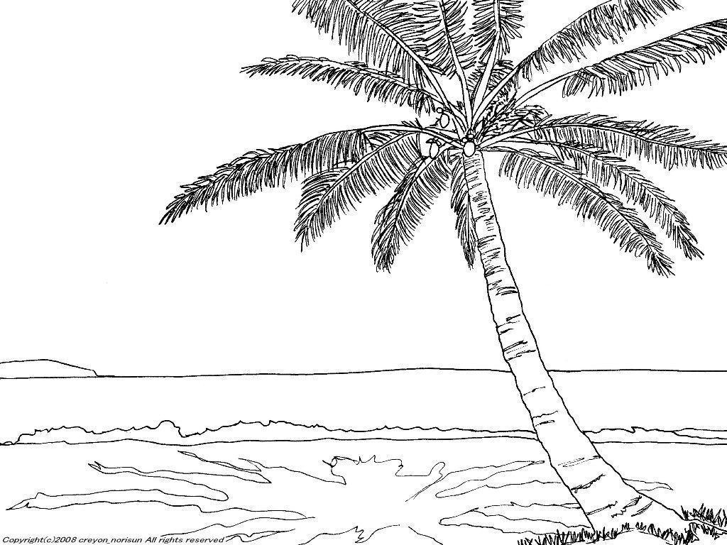イラスト イラスト 塗り絵 : 椰子のある南国の下絵~風景の ...
